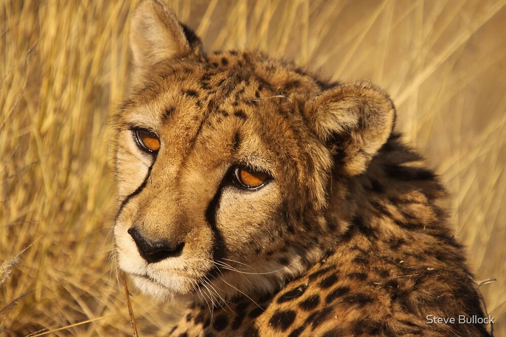 Cheetah by Steve Bullock