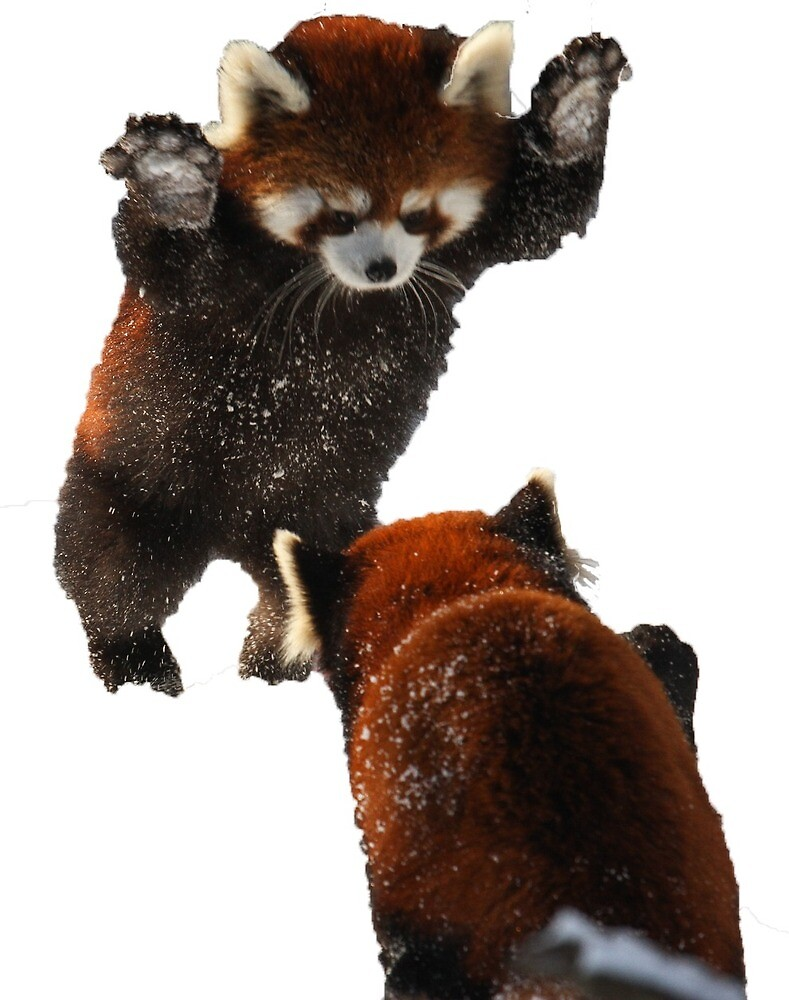 Red Panda by elliepelham