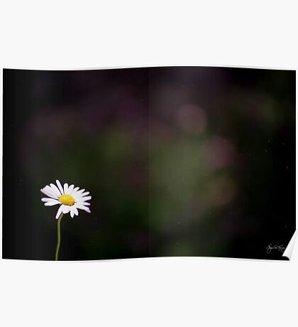 The Lone Daisy Poster