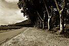 Alongside the Canal du Midi by ragman