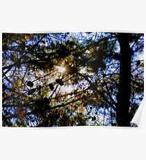 Cone Grove sunrise, abstract Poster