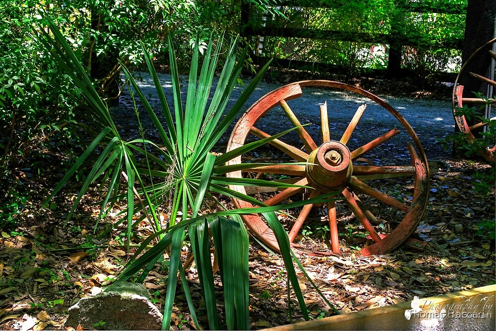 THE OLD WAGON WHEEL by TJ Baccari Photography