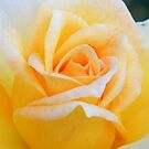 A Rose For A Special Lady Who Was Once Daddy's Girl by raindancerwoman