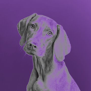 Purple Dog Print by Sandyram