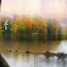 The Pond by John Rivera