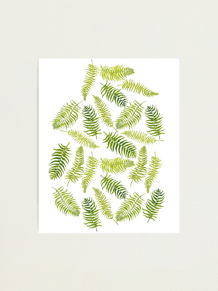 Alternate view of Fern Limelight Photographic Print