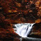 Autumn Dream by PJS15204