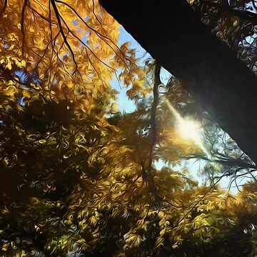 Fall Yellow Swirl Leaves in Sunlight by bloomingvine