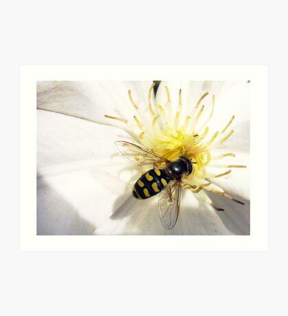 Bee's Cousin Art Print