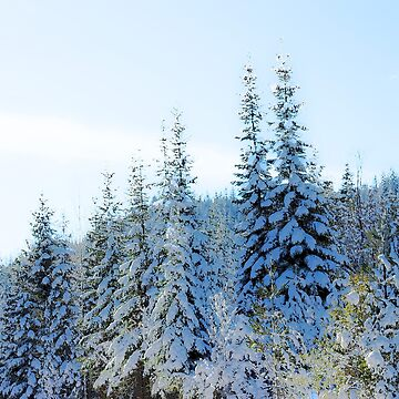 Frosty Mountain Trees by MelissaB
