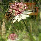 bee happy by dinghysailor1