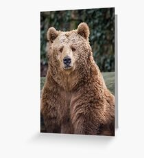 The brown bear looks at me Greeting Card