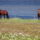 Horses of Margaree Harbour  by kenmo