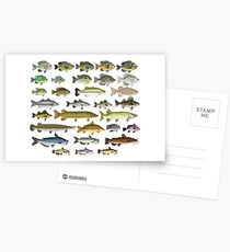Freshwater Fish Group Postcards