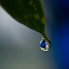 Dew Drop by KarenM