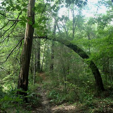 The Arch in the Forest by MayLattanzio
