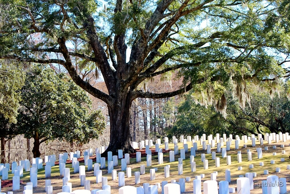 Wilmington National Cemetery by Cynthia48