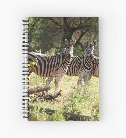 ARE WE SUPPOSE TO SMILE - BURCHELL'S ZEBRA – Equus burchelli – Bontkwagga Spiral Notebook