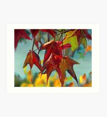 Late Autumn Leaves Art Print