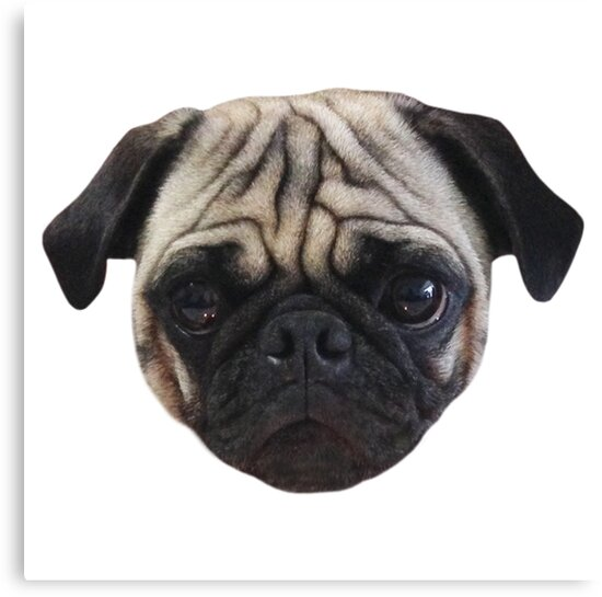 Cute Caesar the Pug Face by AiReal Apparel by airealapparel