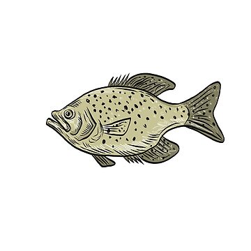 Crappie Fish Side Drawing by patrimonio