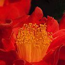 Camellia #6 - National Camellia Show, Warragul, Victoria by Bev Pascoe