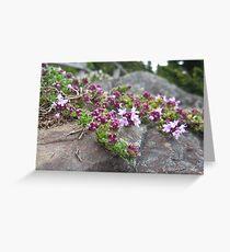 Spring Thyme Greeting Card