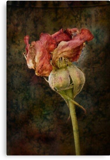 Rust n Roses ~ #13 by Rosalie Dale