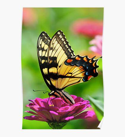 A FLOWER ROMANCE -VII-  Poster