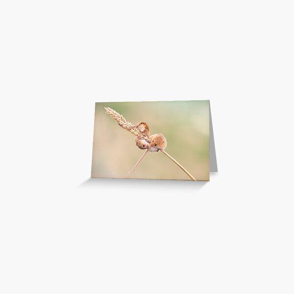 Field Mice kissing Greeting Card