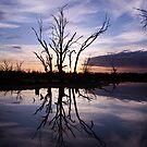 Blue sunrise by Steve Chapple