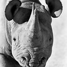 Black Rhinoceros by Richard Garvey-Williams
