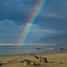 UNDER THE RAINBOW by kotybear