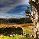 Peak District Longshaw Estate by Paul Thompson Photography