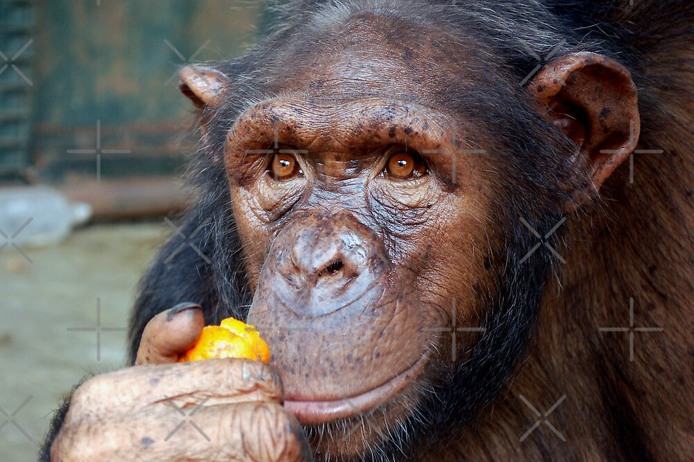 Chimp Mother by ApeArt