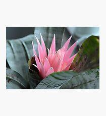 Lámina fotográfica The Gentle Beauty - Bromeliad