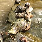 Hermit Crab Pile Up by Sue Ellen Thompson