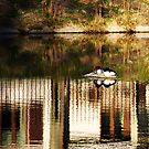 Pond life by Bluesrose