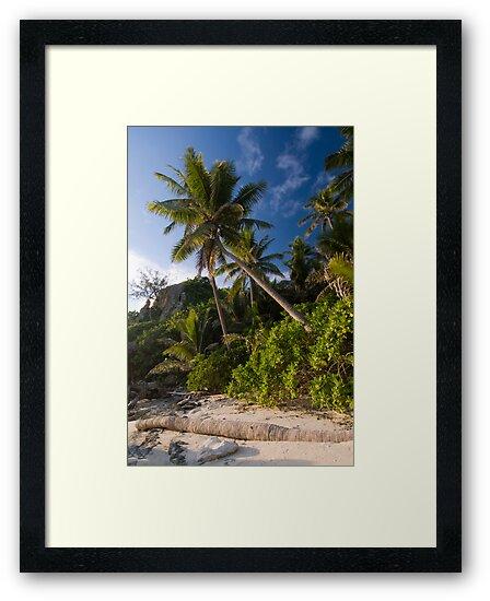 Palm by Michael Treloar