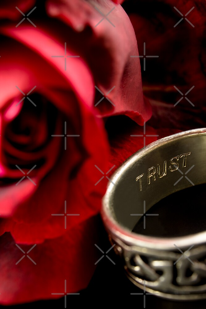 Trust a red rose by Sandra O'Connor