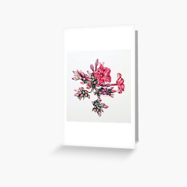 Garden Phlox Greeting Card