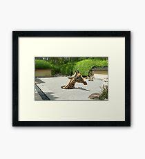 Gopher Giraffe Framed Print