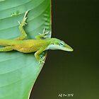 Green Anole (Anolis,carolinsis) on a Leaf by Jeff Ore