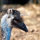 I'm ready for my closeup  by Cheryl Dunning