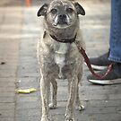 Dog on a Leash by Mike Edge
