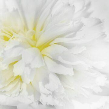 Peony in White by lenzart