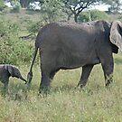 Wait for Me! Tarangire National Park, Tanzania by Adrian Paul