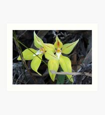Foxes Lair Cowslip Orchid Art Print