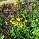 Hollow Stump and Primrose by Deborah McCormick