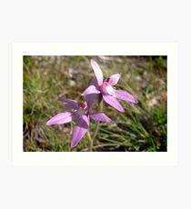 Pink Faries (Caladenia latifolia) Art Print